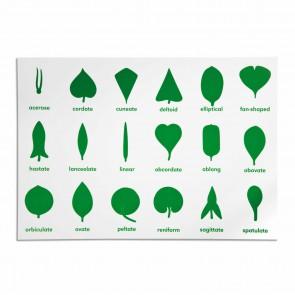 Komoda botaniczna - karta kontrolna (ang), Nienhuis Montessori