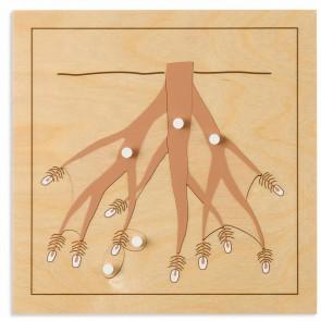 Puzzle botaniczne - korzeń, Nienhuis Montessori