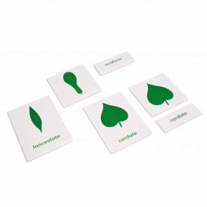 Komoda botaniczna - karty z podpisami (ang), Nienhuis Montessori